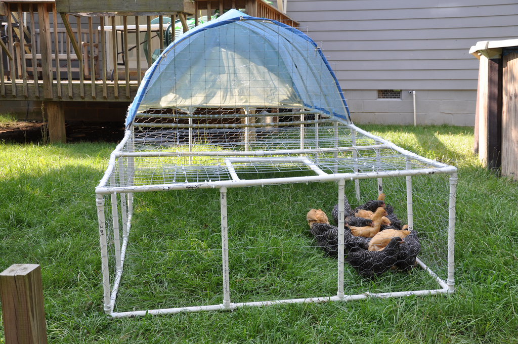 Pvc chicken tractor razor family farms for Pvc chicken tractor plans
